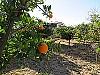 Orange trees  - 4 bed 1 bath Villa Vilamarchante