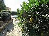 Lemon tree  - 3 bed 3 bathroom Villamarchante