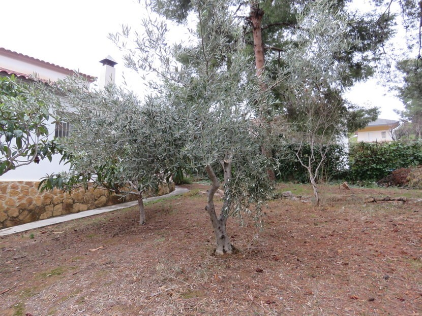 Olive tree  - 4 bedroom 2 bathroom villa Villamarchante