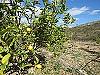 Lemon tree  - 3 bed 1 bath Pedralba