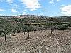 Orchard  - 3 bed 1 bath Pedralba