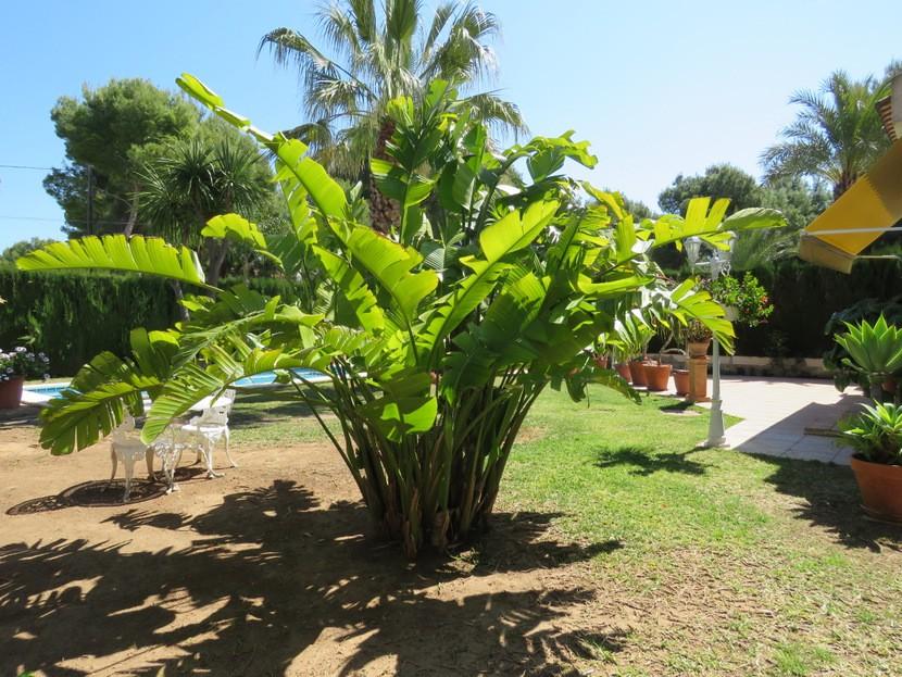 Garden - 4 bed 2 bath Olocau