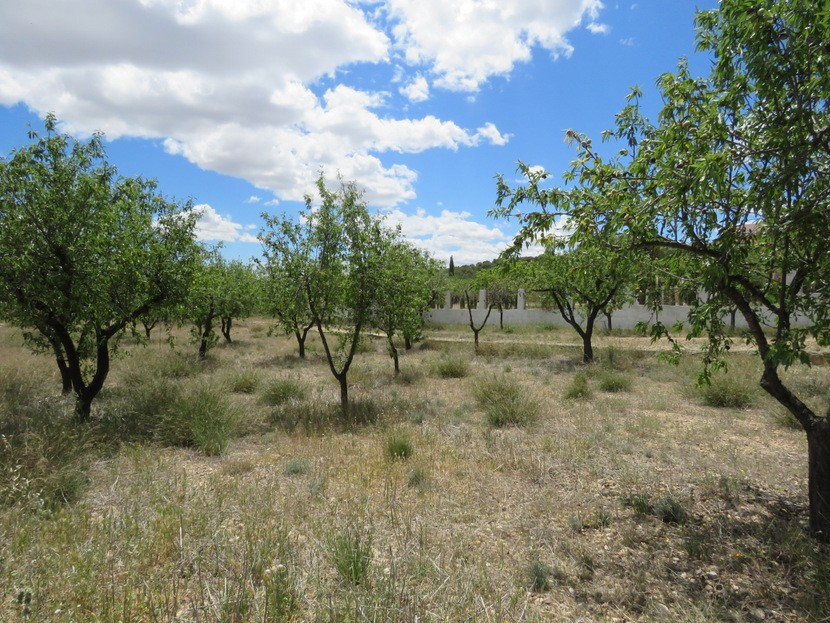 Almond trees  - 3 bed 1 bath Casinos