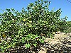 Fruit trees - 3 bed 1 bath Montroy