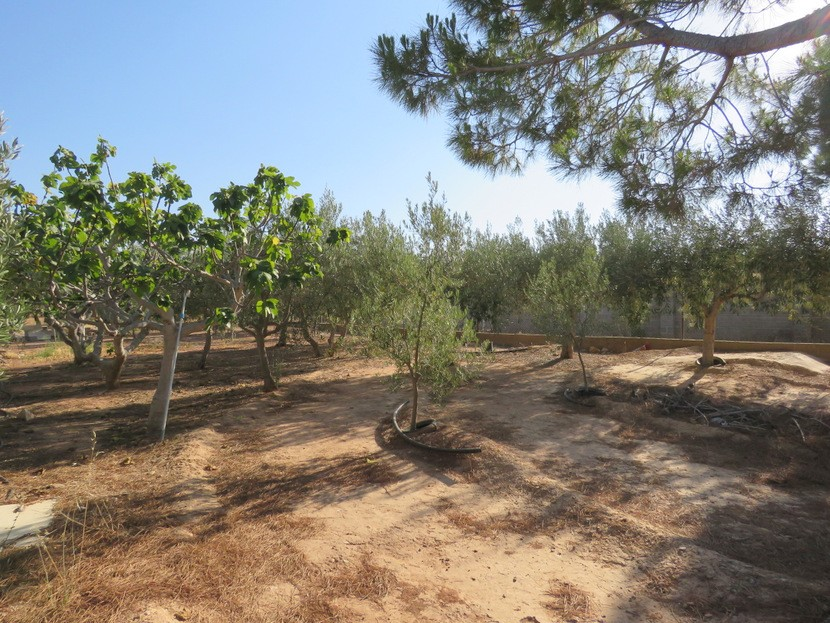 Olive grove - 3 bed 1 bath Betera