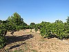 Fruit trees - 3 bed 1 bath Betera