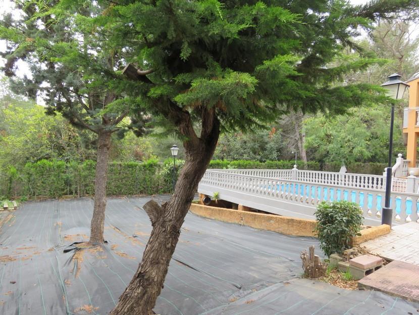 Trees  - 5 bed 3 bath Chiva
